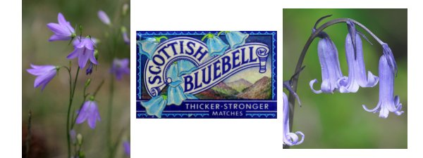 scottish bluebell, english bluebell and scottish bluebell matchbox